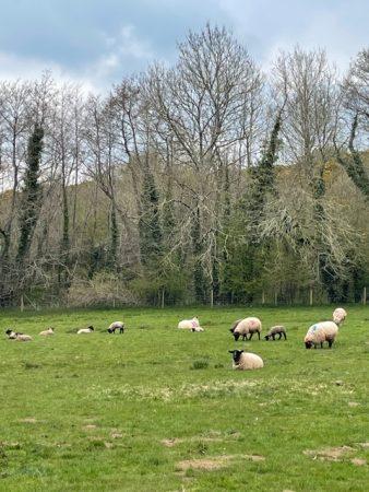 Teign School Farm Update by Kanye Leeper Year 10